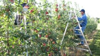Всемирный банк предоставит 350 тыс. долларов в виде грантов для садоводов
