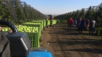 Экспорт свежего урожая яблок в Россию начнется в начале 2020 года
