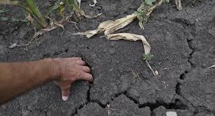 Беспрецедентная помощь  аграриям от государства