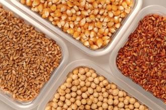 Правительство введет новые правила на рынке семян и посадочного материала