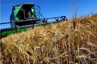 Правительство одобрило пакет мер по поддержке аграриев, которые пострадали в результате засухи