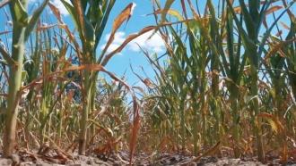 Ион Кику заверил, что фермеры, которые потеряли урожай культур второй группы, получат компенсации