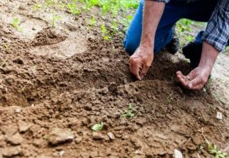 Правительство выделяет 12 млн. леев 22 начинающим аграриям