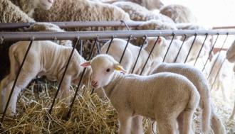 Поддержка для животноводов