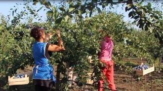 Новый удар по отечественным производителям! Майя Санду отказалась одобрять закон, поддерживающий молдавских аграриев