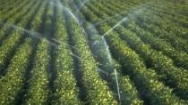Сельхозпроизводители могут подавать с сегодняшнего дня заявки на субсидии