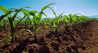Bugetul Fondului de subvenţionare în agricultură ar putea ajunge în 2016 la 1 mlrd lei