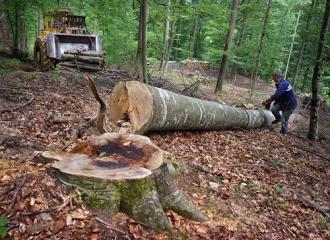 Moldsilva a interzis tăierea copacilor în pădurile Moldovei