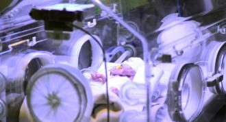 O poloneză aflată în moarte cerebrală, menținută artificial în viață două luni, a născut un copil sănătos
