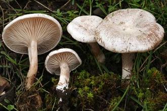 Două familii din Soroca s-au intoxicat cu ciuperci