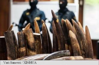 Franța: Peste 350 kg de fildeși confiscați, cea mai mare captură din ultimii zece ani