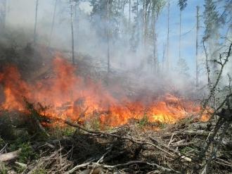 Incendiu de vegetaţie în Cipru, soldat cu doi morţi