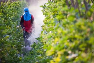 Pesticidele contrafăcute, periculoase pentru sănătate