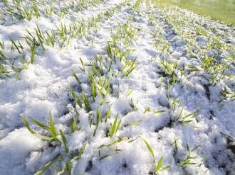 Situație incertă în agricultură