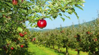 Moldova riscă să rămână fără specialişti în horticultură