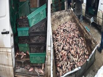 O tonă și jumătate de pește viu, păstrat în condiții antisanitare, urma să fie vândut la Piața Centrală