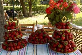 Festivalul Căpșunilor și Mierii, se va desfășura în acest an sub patronajul Președintelui RM