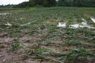 Ploile din luna iunie au generat pierderi în agricultură de peste 16 milioane de lei