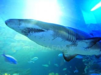 O fetiţă a fost rănită grav, după ce a fost atacată de un rechin în Australia