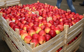 A crescut exportul de mere spre Rusia