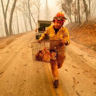 Cel puţin 79 de morţi, peste 1.200 de persoane dispărute, după incendiile de vegetaţie din California