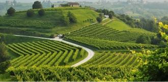 Colinele viticole din Prosecco au fost înscrise pe lista Patrimoniului Mondial UNESCO
