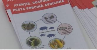 Amenințați de pesta porcină africană
