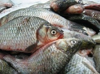 Anchetă internă la ANSA în cazul loturilor de pește infectat