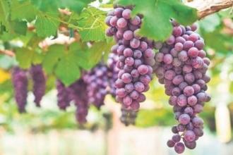 Exporturile de vinuri în 2019 au atins cele mai mari cifre din ultimii cinci ani