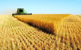 Va fi interzis exportul de cereale