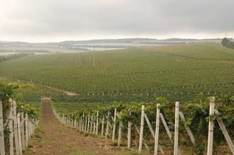 Igor Dodon este categoric împotriva ca străinii să cumpere terenuri de pământ în Republica Moldova