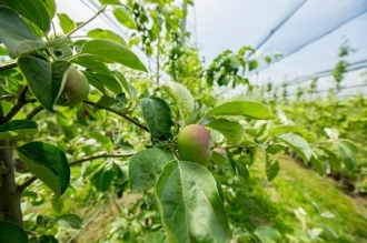 Vor să modernizeze agricultura