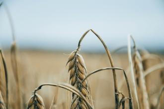 Agricultorii care au avut de suferit din urma calamităților ar putea beneficia de facilități la achitarea creditelor