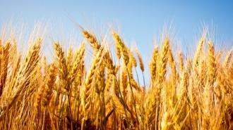 La moment, nu este problemă de lipsă de grâu pentru alimentarea țării, spune premierul