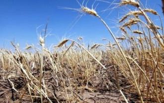 Încă 250 de fermieri, afectați de secetă, vor primi ajutor de la stat