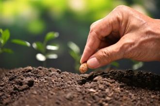 Producerea de semințe va fi finanțată de Guvern