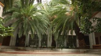 Palmieri de 42 de ani în Capitală