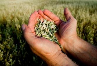 Moldova este asigurată cu grâu, susține Agenția Rezerve Materiale