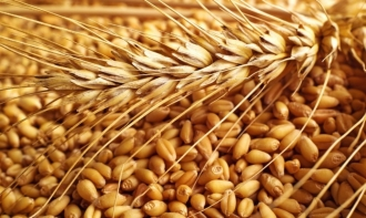 Expert: În Moldova, stocul de grâu este mai mare decât rezervele necesare