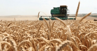 Totul se confirmă! Maia Sandu propune ca grâul din rezerva de stat să fie oferit sectorului zootehnic cu titlu de împrumut
