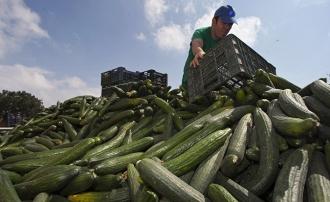 Fermierii, la limita disperării: Pentru că nu au unde să-și vândă marfa, o dau la animale