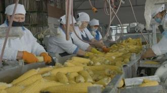 Industria agroalimentară și producătorii locali, ignorate de noua guvernare