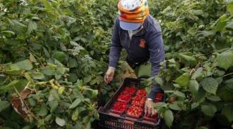 Moldovenii, trimiși la muncă în Germania