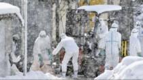 Japonia: 80.000 de păsări sacrificate după izbucnirea unui focar de gripă a ...