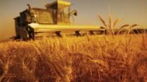 Agricultorii pot depune cereri pentru obținerea subvențiilor pe anul curent