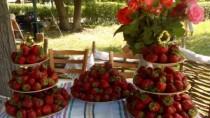 Festivalul Căpșunilor și Mierii, se va desfășura în acest an sub patronajul ...