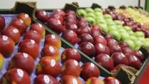 Harta exporturilor de fructe