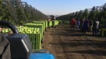 Prețuri mai bune pentru merele moldovenești
