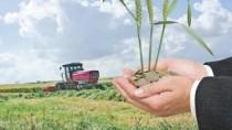 Ministru agriculturii, despre exportul de grâu: Acesta nu este motiv de pan ...